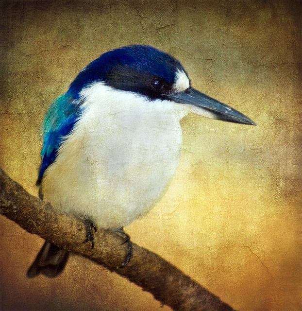 beautifulbirdshelovespix2bird